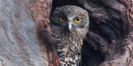 Powerful Owl Walk and Talk tickets
