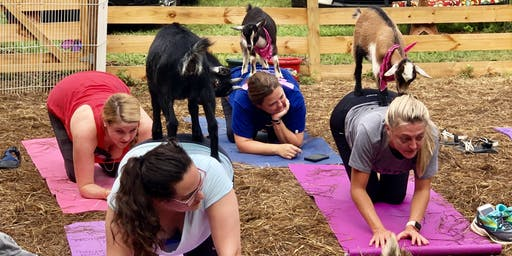 Goat Yoga Bham-Yoga at our family farm with a herd of adorable baby goats!