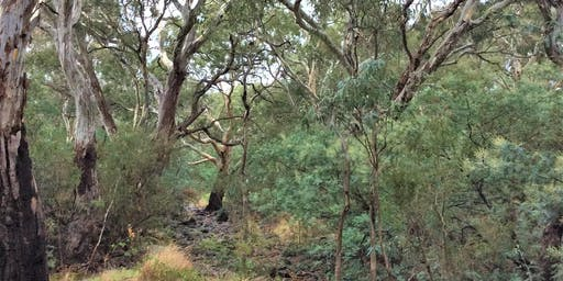 Geelong Biodiversity Month - Forest Therapy Walk on the Barwon River