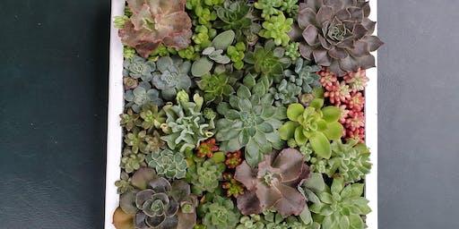 Succulent Wall Art workshop