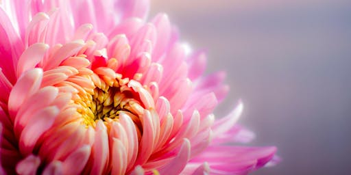 Universe of Deliciousness - Accessing the abundance of pleasure possible