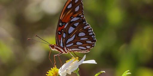Adventure Awaits - Butterfly Hike