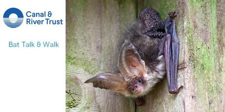 Family Bat Talk and Walk tickets