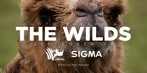 Photo Safari at the Wilds with Sigma!