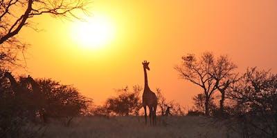 African Travel Safari Night