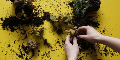 Plant Swap with London Terrariums  tickets