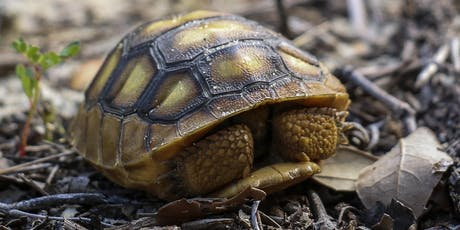 Adventure Awaits - Growing Up Wild-Turtles and Tortoises tickets