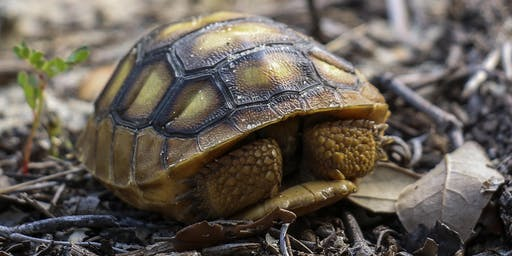 Adventure Awaits - Growing Up Wild-Turtles and Tortoises