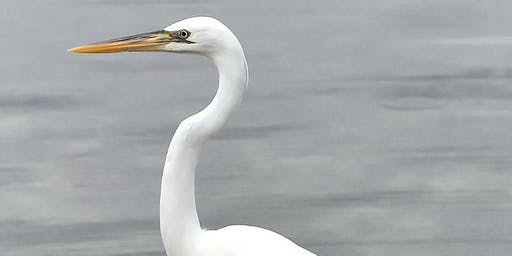Buffalo Audubon Community Birding Walk