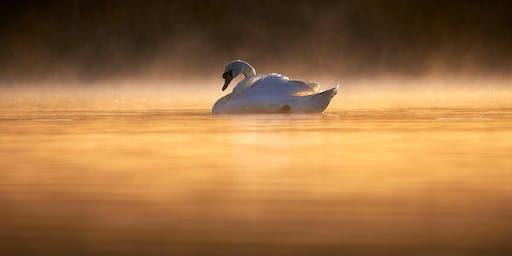 Bird Photography on Olympus with Rob Cottle