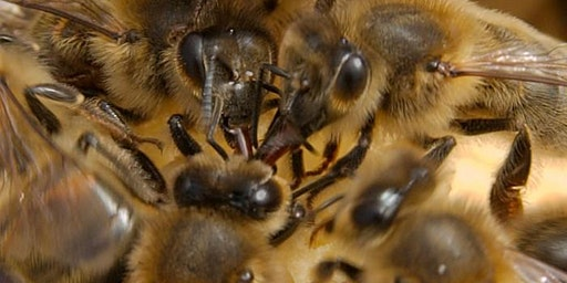Honey Bee Behaviour
