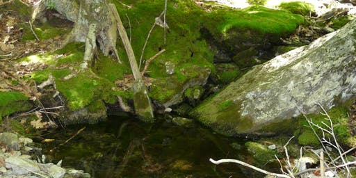 From Bedrock to Birds: How Geology and Hydrology Shape Ecosystems