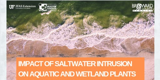 Impact of saltwater intrusion on aquatic and wetland plants