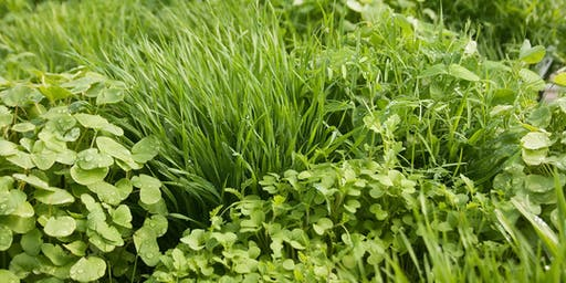 Introduction to Cover Crops