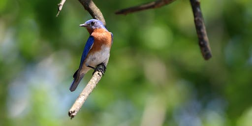 Fall Migration Bird Walk - October 12, 2019