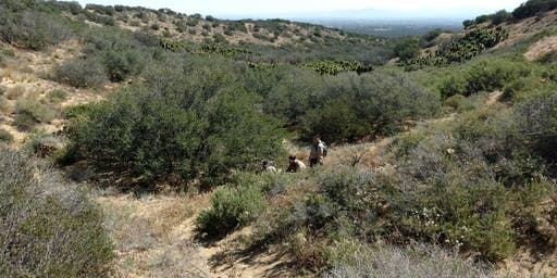 Restoration Volunteer Project: Seed Collecting & Watering at  Baldy Mesa