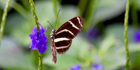 Butterfly Garden Design Basics tickets