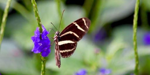 Butterfly Garden Design Basics