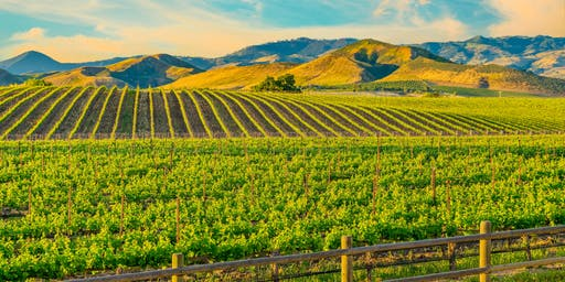 Top 5 California Wines (Wine and Beyond Sage Hill)