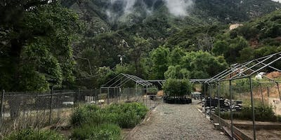 Restoration Volunteer Project- Lytle Creek Native Plant Nursery