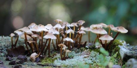Mushroom ID & Foraging Walk tickets