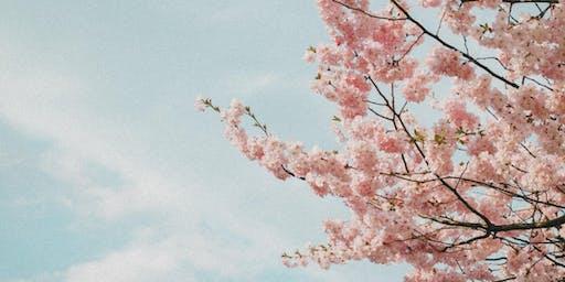 Sydney Cherry Blossom Festival -  Samsung Photowalk with Kurt Tilse