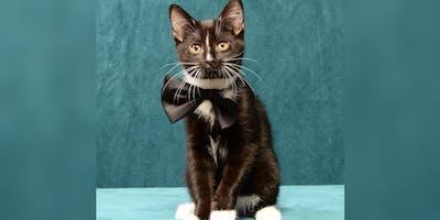 Black Cat Gala: A Benefit for Cat Angels