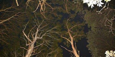 Spotlight night walk at Mount Charlie, Riddells Creek