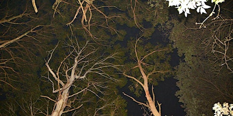 Booked out-Spotlight night walk at Mount Charlie, Riddells Creek tickets
