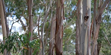 Eucalyptus ID workshop - Black Hill Reserve tickets