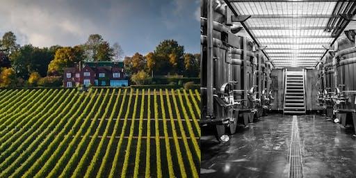 Sundowners at Hambledon Vineyard - Wine tour and tasting – Bring a friend