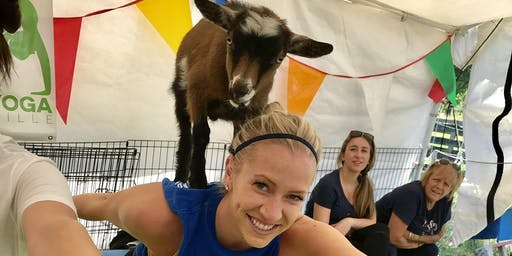 Goat Yoga Nashville - Sensational September