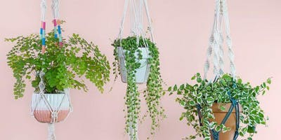 Plants & Pints w/ Frayed Ends Designs