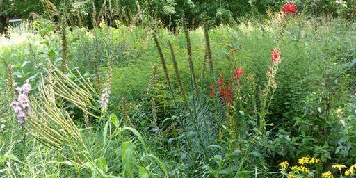High Park Stewards Native Plant Sale