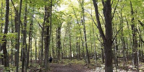 Summer Twilight Forest Walk tickets