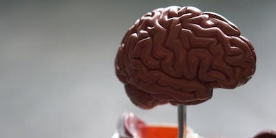The Teen Brain: Its Development and Relationship to Mental Illness