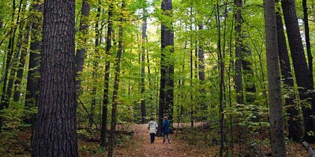 Forest Walk With Old-Growth Pines tickets