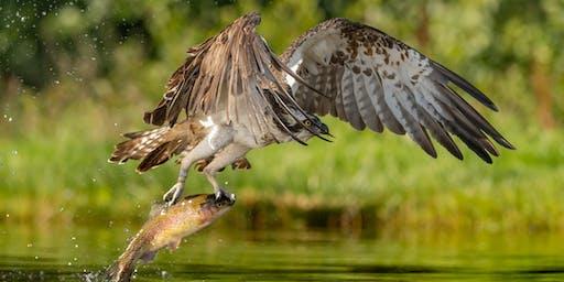 Wildlife Photography … The Basics - Gary Jones - Saturday