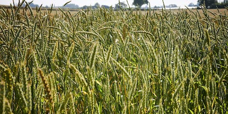 The Flavour of Wheat: a Harvest Tasting tickets