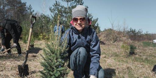 Plant A Tree Day in Cincinatti