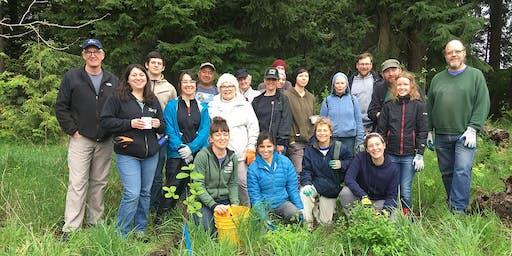 Plant A Tree Day in Hillsboro