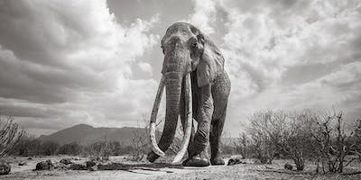 Remote Adventure - Will Burrard-Lucas