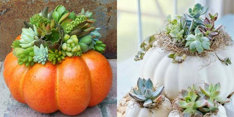 Pumkin Succulent Centerpiece tickets