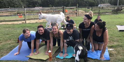 Carolina Goat Yoga Class: Sept 21st