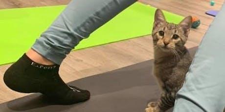 Kitten Yoga Two - The Purrs Awaken tickets