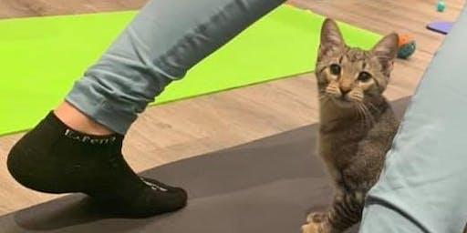 Kitten Yoga Two - The Purrs Awaken