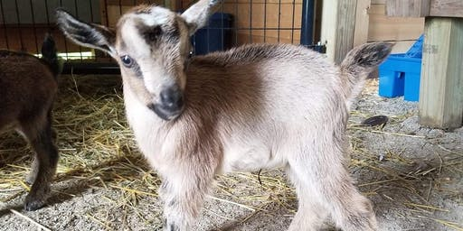 Goat Yoga Pre-Halloween Bash