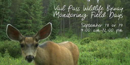 Vail Pass Wildlife Byway Monitoring Field Days