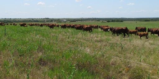 Taking Your Grazing to the Next Level with Holistic Management