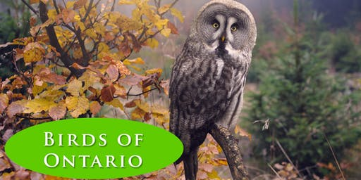 Exploring the Birds of Ontario